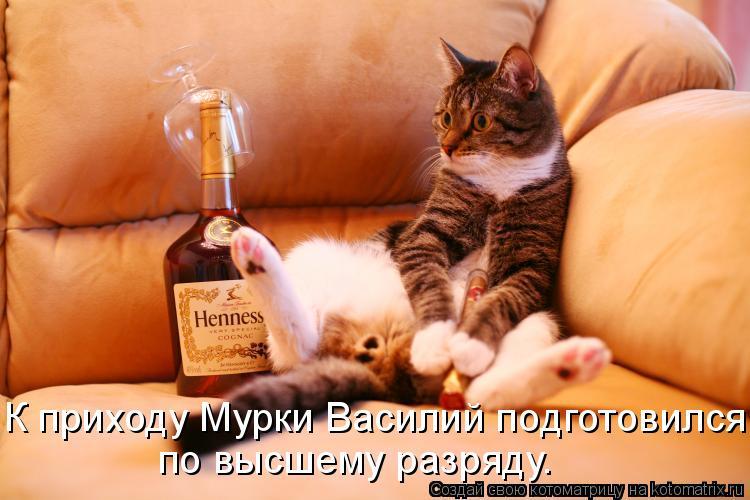 Котоматрица: К приходу Мурки Василий подготовился  по высшему разряду.