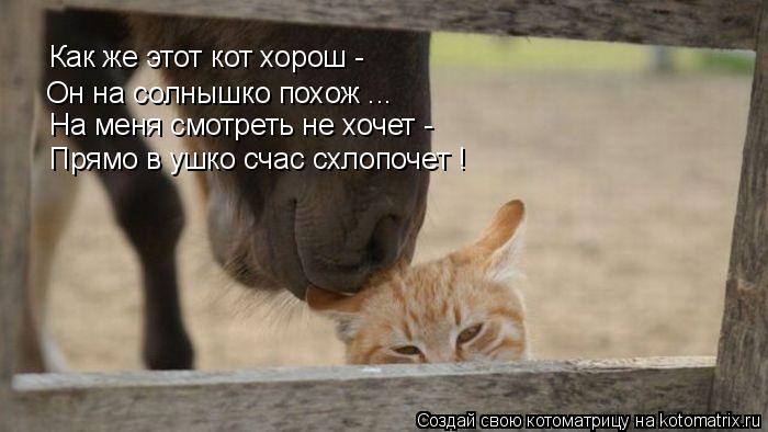 Котоматрица: Как же этот кот хорош - На меня смотреть не хочет - Он на солнышко похож ... Прямо в ушко счас схлопочет ! Как же этот кот хорош -