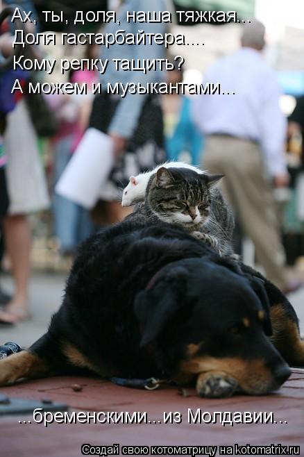 Котоматрица: Ах, ты, доля, наша тяжкая... Доля гастарбайтера.... Кому репку тащить? А можем и музыкантами... ...бременскими...из Молдавии...
