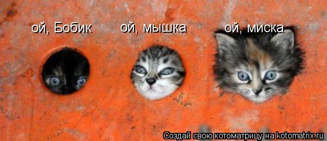 Котоматрица: ой, Бобик ой, мышка ой, миска