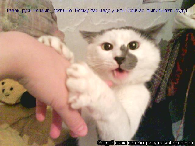 Котоматрица: Тааак, руки не мыл,  грязные! Всему вас надо учить! Сейчас  вылизывать буду!