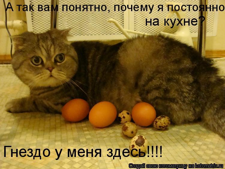 Котоматрица: А так вам понятно, почему я постоянно  на кухне? Гнездо у меня здесь!!!!