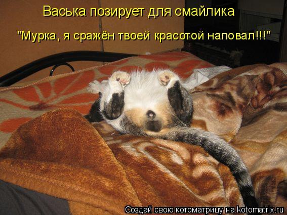 """Котоматрица: Васька позирует для смайлика """"Мурка, я сражён твоей красотой наповал!!!"""""""
