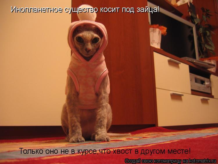 Котоматрица: Инопланетное существо косит под зайца! Только оно не в курсе,что хвост в другом месте!