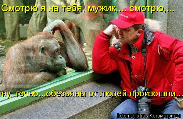 Котоматрица: Смотрю я на тебя, мужик,... смотрю,...  ну, точно...обезьяны от людей произошли...