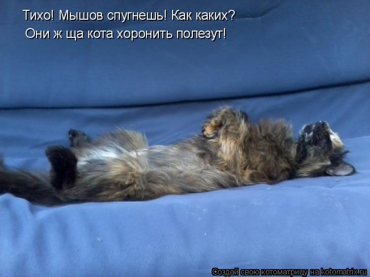Котоматрица - Тихо! Мышов спугнешь! Как каких?  Они ж ща кота хоронить полезут!