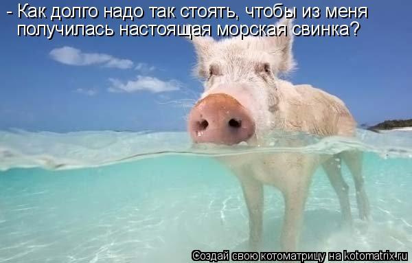 http://kotomatrix.ru/images/lolz/2010/07/13/628165.jpg