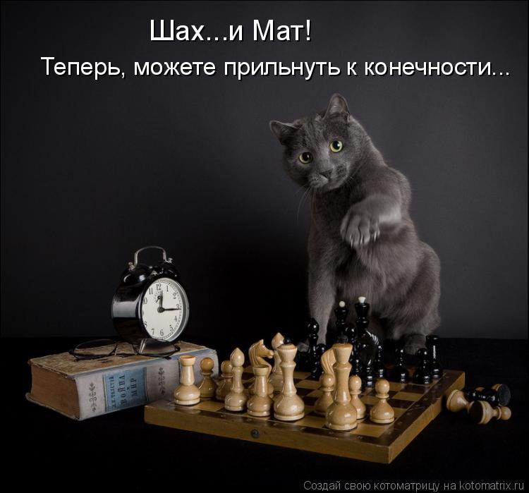 Котоматрица: Шах...и Мат! Теперь, можете прильнуть к конечности...