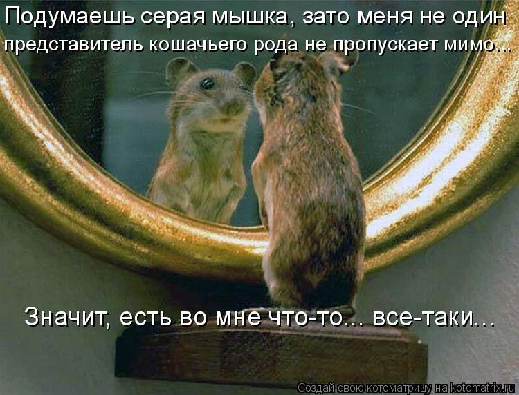 Котоматрица: Подумаешь серая мышка, зато меня не один  представитель кошачьего рода не пропускает мимо...  Значит, есть во мне что-то... все-таки...