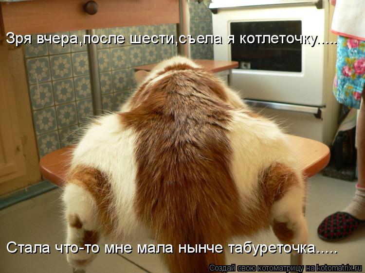 Котоматрица: Зря вчера,после шести,съела я котлеточку..... Стала что-то мне мала нынче табуреточка.....