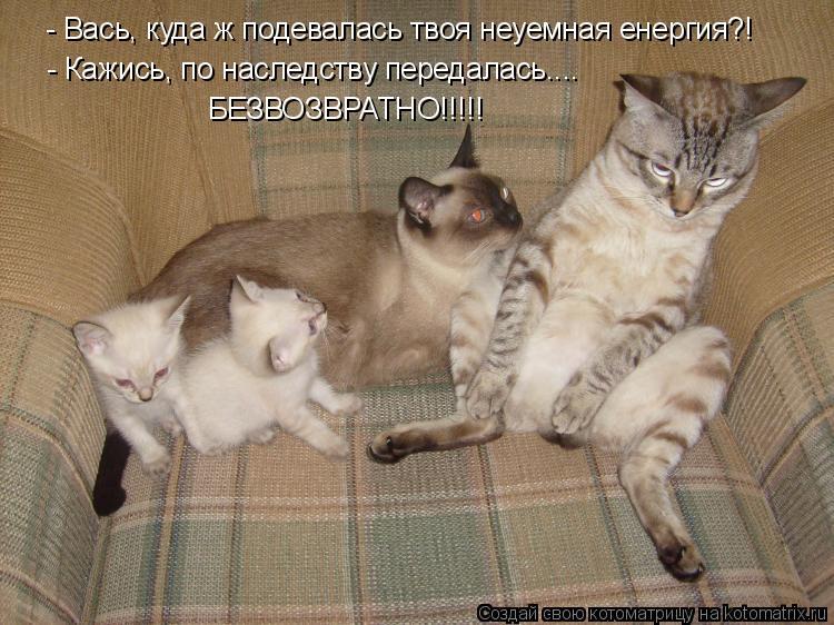 Котоматрица: - Вась, куда ж подевалась твоя неуемная енергия?! - Кажись, по наследству передалась.... БЕЗВОЗВРАТНО!!!!!