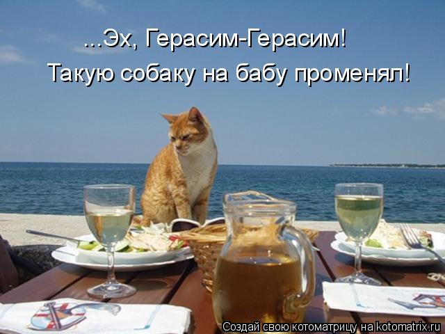 Котоматрица: ...Эх, Герасим-Герасим!  Такую собаку на бабу променял!