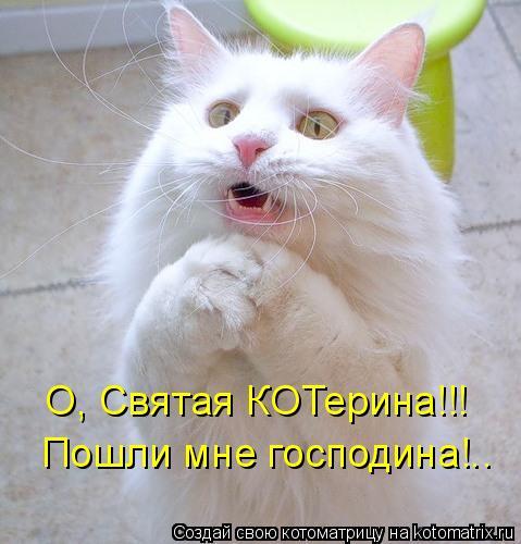 Котоматрица: О, Святая КОТерина!!! Пошли мне господина!..