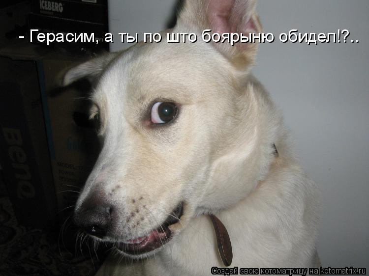 Котоматрица: - Герасим, а ты по што боярыню обидел!?..