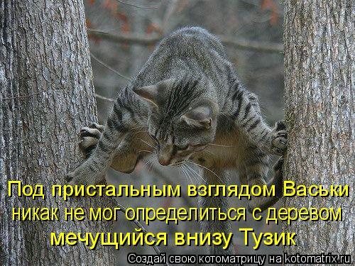 Котоматрица: Под пристальным взглядом Васьки  никак не мог определиться с деревом мечущийся внизу Тузик