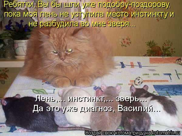 Котоматрица: Ребятки, Вы бы шли уже подобру-поздорову,  пока моя лень не уступила место инстинкту и  не разбудила во мне зверя...  Да это уже диагноз, Васили