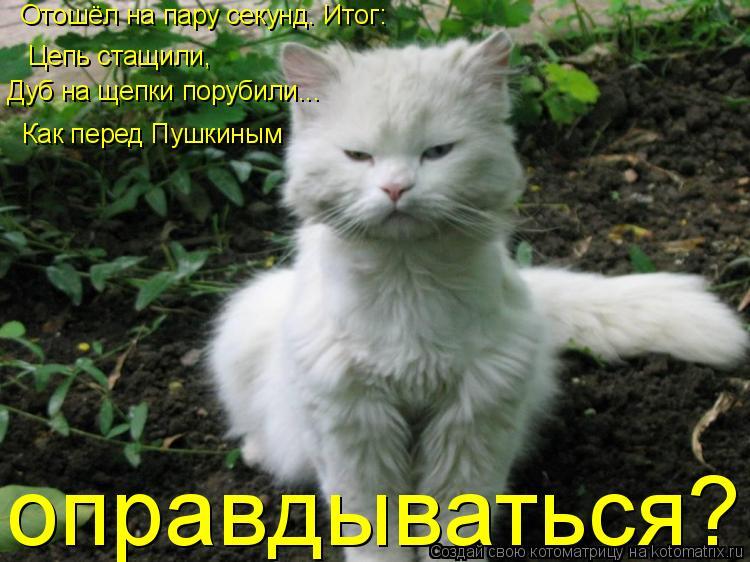 Котоматрица: Отошёл на пару секунд. Итог: Цепь стащили, Дуб на щепки порубили... Как перед Пушкиным  оправдываться?