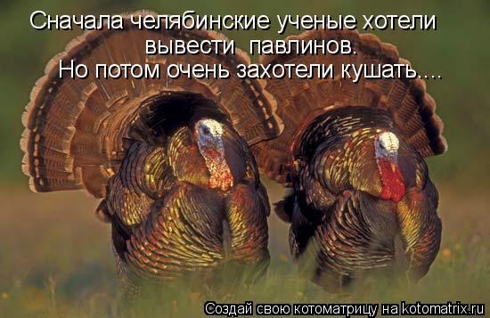 Котоматрица: Сначала челябинские ученые хотели  вывести  павлинов.    Но потом очень захотели кушать....
