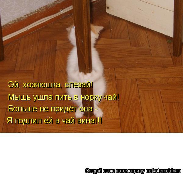 Котоматрица: Эй, хозяюшка, слезай! Мышь ушла пить в норку чай! Больше не придёт она - Я подлил ей в чай вина!!!