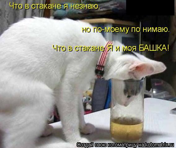 Котоматрица: Что в стакане я незнаю, но по-моему по нимаю. Что в стакане Я и моя БАШКА!