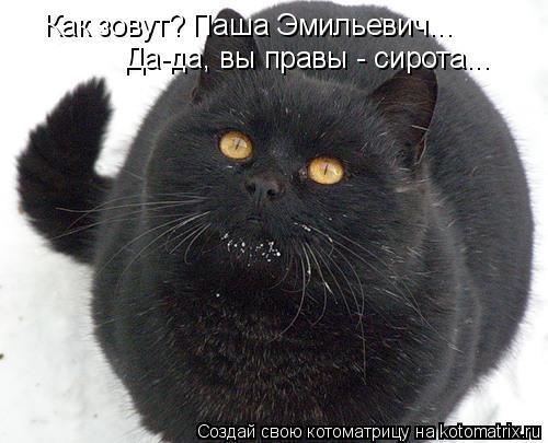 Котоматрица: Как зовут? Паша Эмильевич... Да-да, вы правы - сирота...