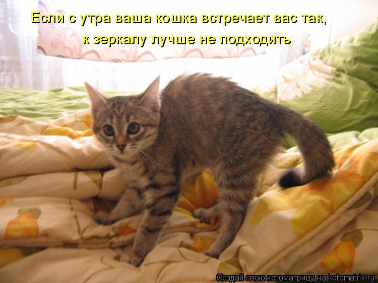 Котоматрица: Если с утра ваша кошка встречает вас так, к зеркалу лучше не подходить