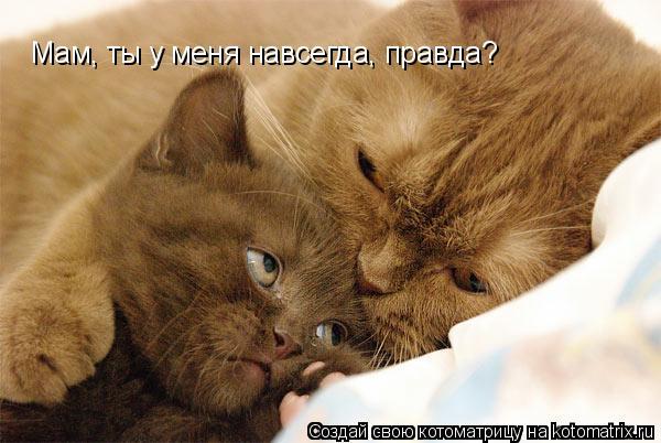 Котоматрица: Мам, ты у меня навсегда, правда?