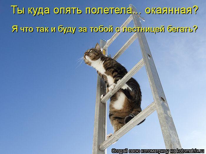 Котоматрица: Ты куда опять полетела... окаянная?  Я что так и буду за тобой с лестницей бегать?