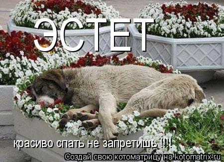Котоматрица: ЭСТЕТ красиво спать не запретишь !!!!
