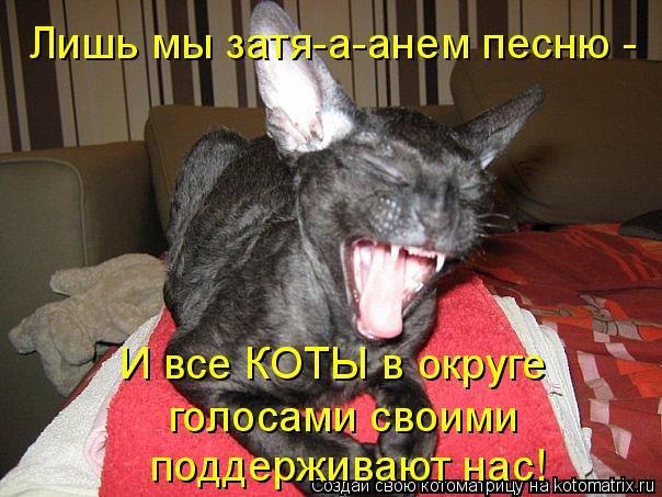 Котоматрица: Лишь мы затя-а-анем песню -  И все КОТЫ в округе голосами своими поддерживают нас!