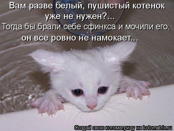 Котоматрица: Вам разве белый, пушистый котенок  уже не нужен?... Тогда бы брали себе сфинкса и мочили его,  он все ровно не намокает...