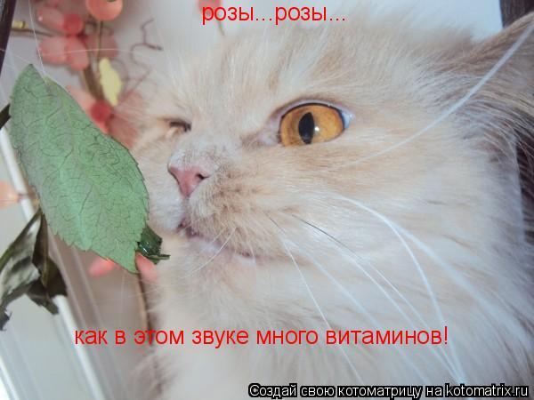 Котоматрица: розы...розы... как в этом звуке много витаминов!