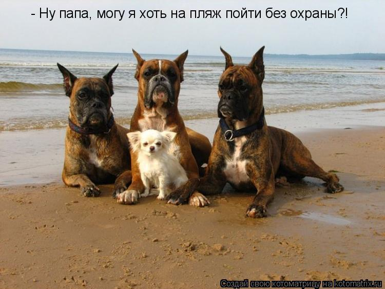 Котоматрица: - Ну папа, могу я хоть на пляж пойти без охраны?!