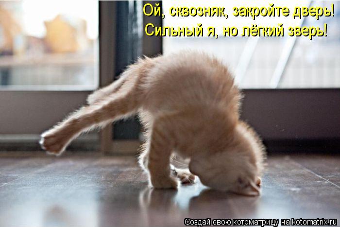 Котоматрица: Ой, сквозняк, закройте дверь!  Сильный я, но лёгкий зверь!
