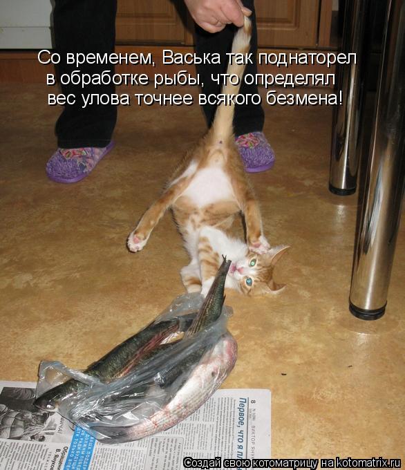 Котоматрица - Со временем, Васька так поднаторел в обработке рыбы, что определял вес