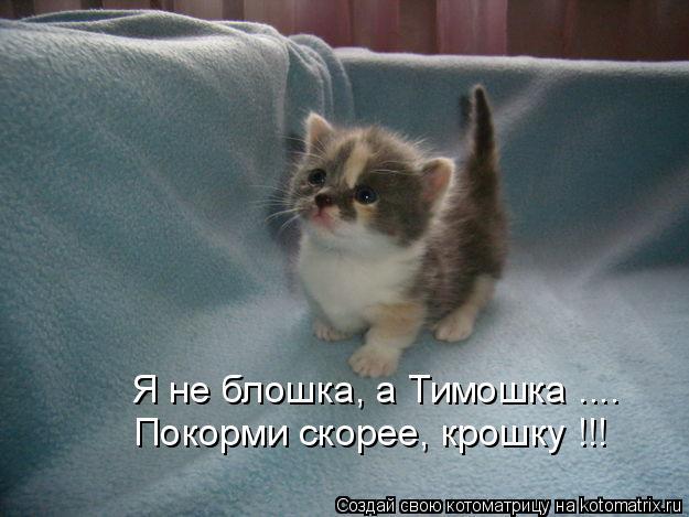 Котоматрица: Я не блошка, а Тимошка .... Покорми скорее, крошку !!!