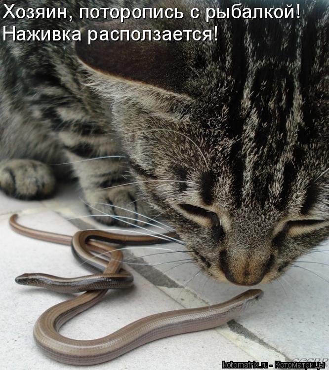 Котоматрица - Хозяин, поторопись с рыбалкой! Наживка расползается!
