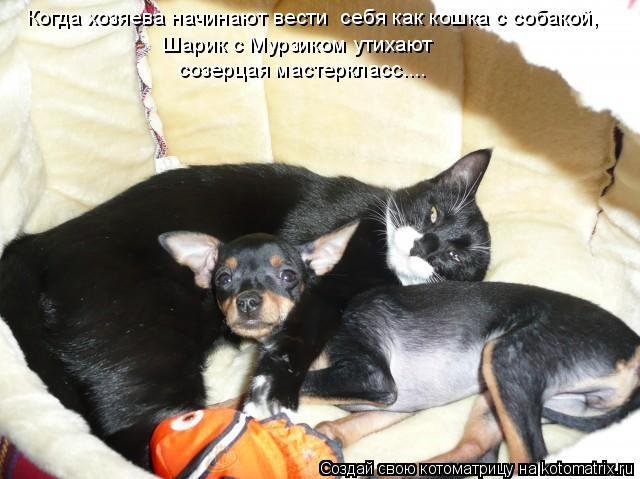 Котоматрица: Когда хозяева начинают вести  себя как кошка с собакой, Шарик с Мурзиком утихают созерцая мастеркласс....