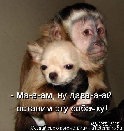- Ма-а-ам, ну дава-а-ай оставим эту собачку!..