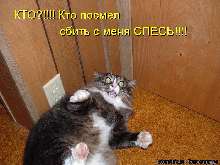 Котоматрица: КТО?!!!! Кто посмел сбить с меня СПЕСЬ!!!!