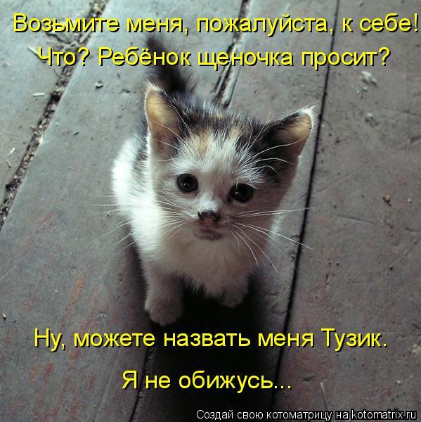 Котоматрица: Возьмите меня, пожалуйста, к себе! Что? Ребёнок щеночка просит? Ну, можете назвать меня Тузик. Я не обижусь...