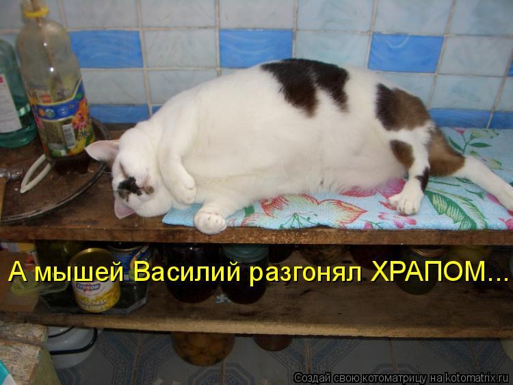 Котоматрица: А мышей Василий разгонял ХРАПОМ...