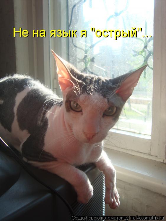 """Котоматрица: Не на язык я """"острый""""..."""