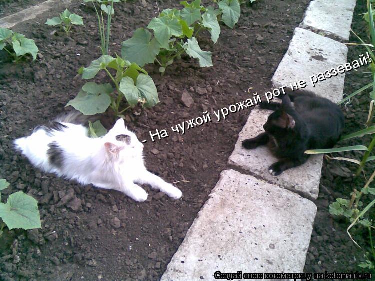 Котоматрица: - На чужой урожай рот не раззевай!