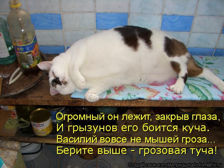 Котоматрица: Огромный он лежит, закрыв глаза, И грызунов его боится куча. Василий вовсе не мышей гроза... Берите выше - грозовая туча!