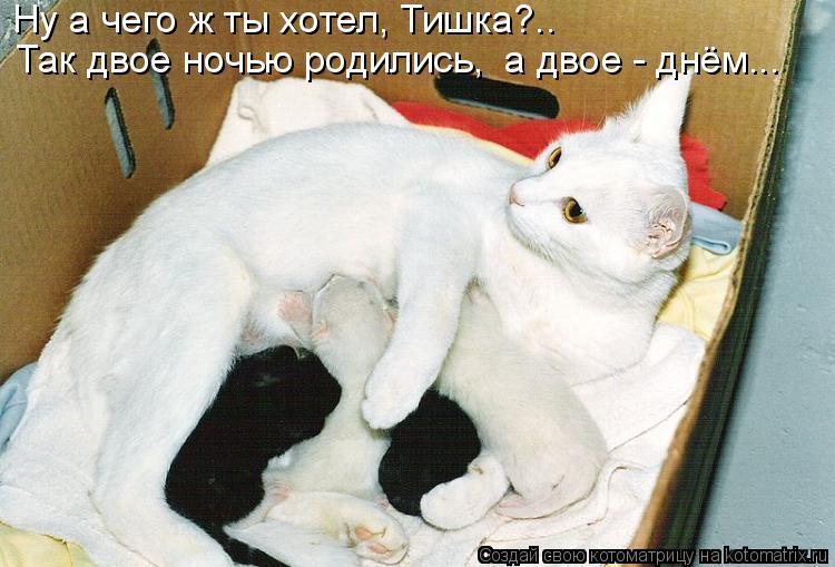 Котоматрица: Ну а чего ж ты хотел, Тишка?..   Так двое ночью родились,  а двое - днём...