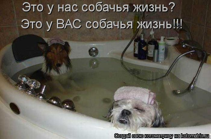 Котоматрица: Это у нас собачья жизнь?  Это у ВАС собачья жизнь!!!