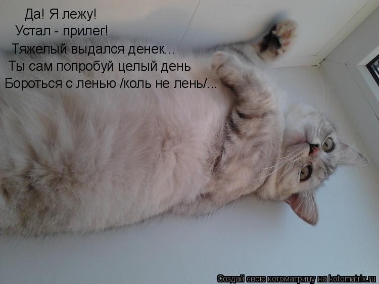 Котоматрица: Да! Я лежу! Устал - прилег! Тяжелый выдался денек... Ты сам попробуй целый день Бороться с ленью /коль не лень/...