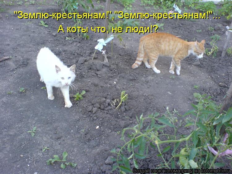 """Котоматрица: """"Землю-крестьянам!"""",""""Землю-крестьянам!""""... А коты что, не люди!?"""