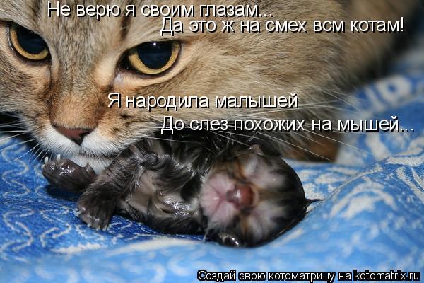 Котоматрица: Не верю я своим глазам... Да это ж на смех всм котам! Я народила малышей До слез похожих на мышей...